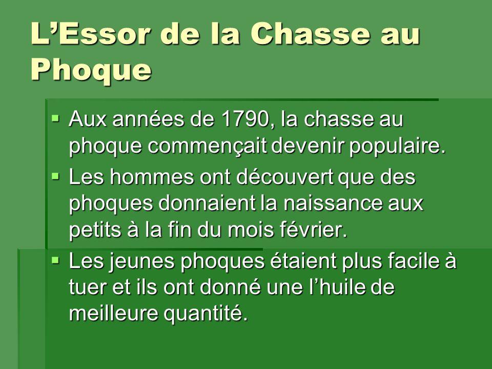 L'Essor de la Chasse au Phoque  Aux années de 1790, la chasse au phoque commençait devenir populaire.