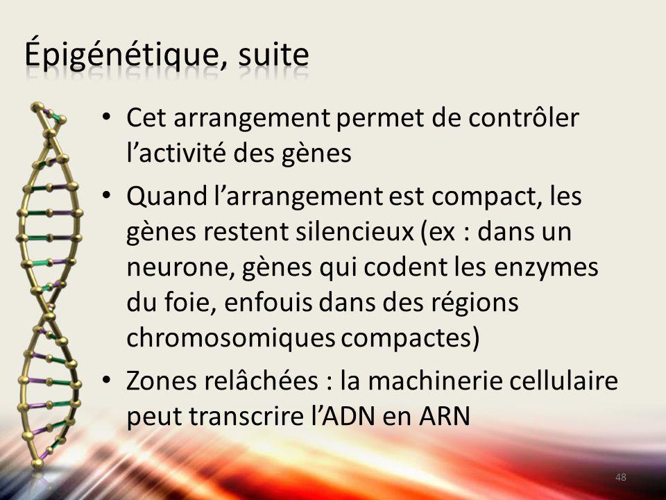 Cet arrangement permet de contrôler l'activité des gènes Quand l'arrangement est compact, les gènes restent silencieux (ex : dans un neurone, gènes qu