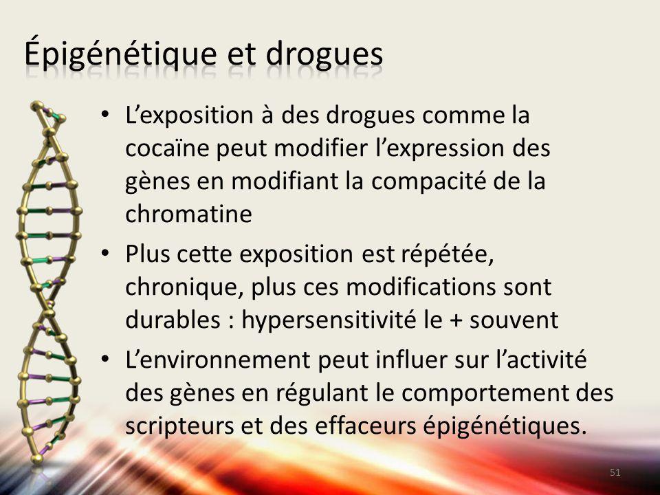 L'exposition à des drogues comme la cocaïne peut modifier l'expression des gènes en modifiant la compacité de la chromatine Plus cette exposition est