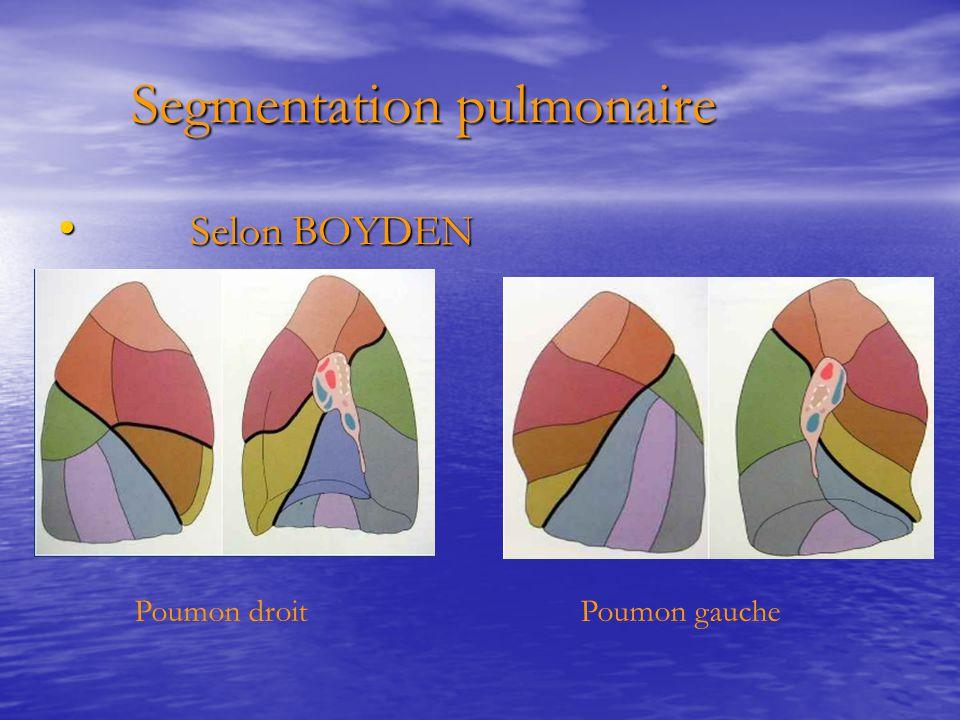 Segmentation pulmonaire Segmentation pulmonaire Selon BOYDEN Selon BOYDEN Poumon droitPoumon gauche