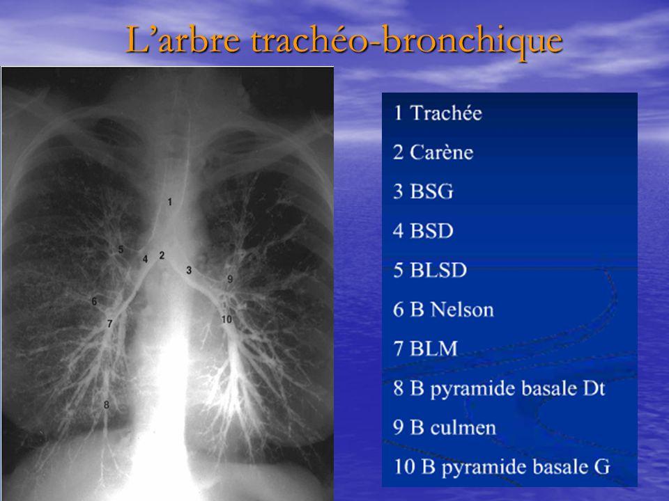 L'arbre trachéo-bronchique L'arbre trachéo-bronchique