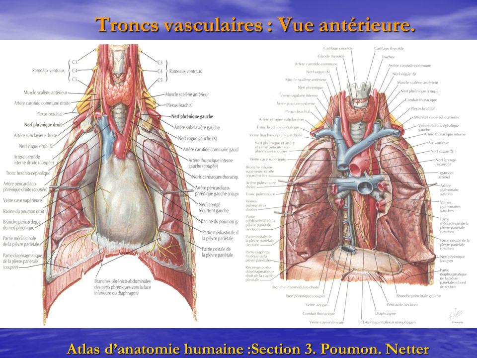 Troncs vasculaires : Vue antérieure. Troncs vasculaires : Vue antérieure. Atlas d'anatomie humaine :Section 3. Poumon. Netter