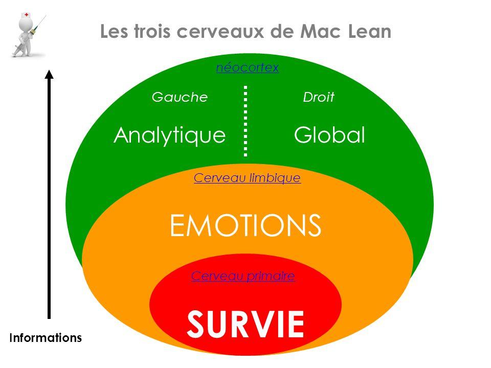 néocortex GaucheDroit Les trois cerveaux de Mac Lean Cerveau limbique Cerveau primaire SURVIE EMOTIONS AnalytiqueGlobal Informations