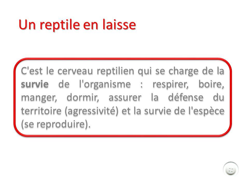 Un reptile en laisse C est le cerveau reptilien qui se charge de la survie de l organisme : respirer, boire, manger, dormir, assurer la défense du territoire (agressivité) et la survie de l espèce (se reproduire).