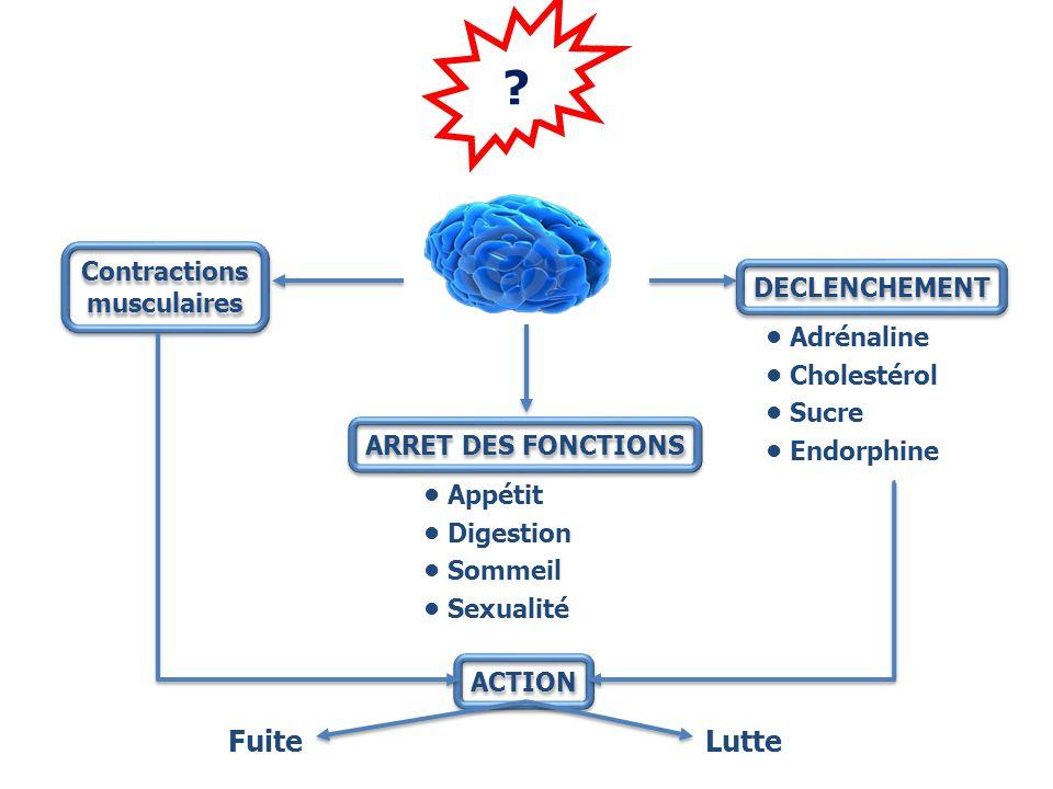 ? Contractions musculaires Contractions musculaires DECLENCHEMENT Adrénaline Cholestérol Sucre Endorphine ARRET DES FONCTIONS Appétit Digestion Sommeil Sexualité ACTION FuiteLutte