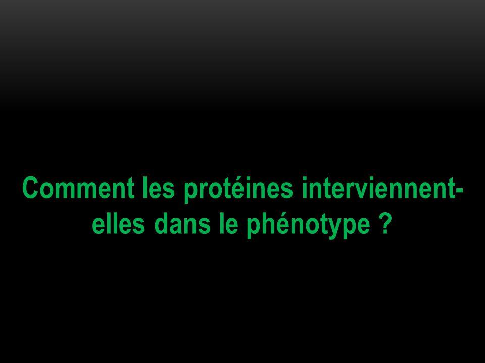 Comment les protéines interviennent- elles dans le phénotype ?