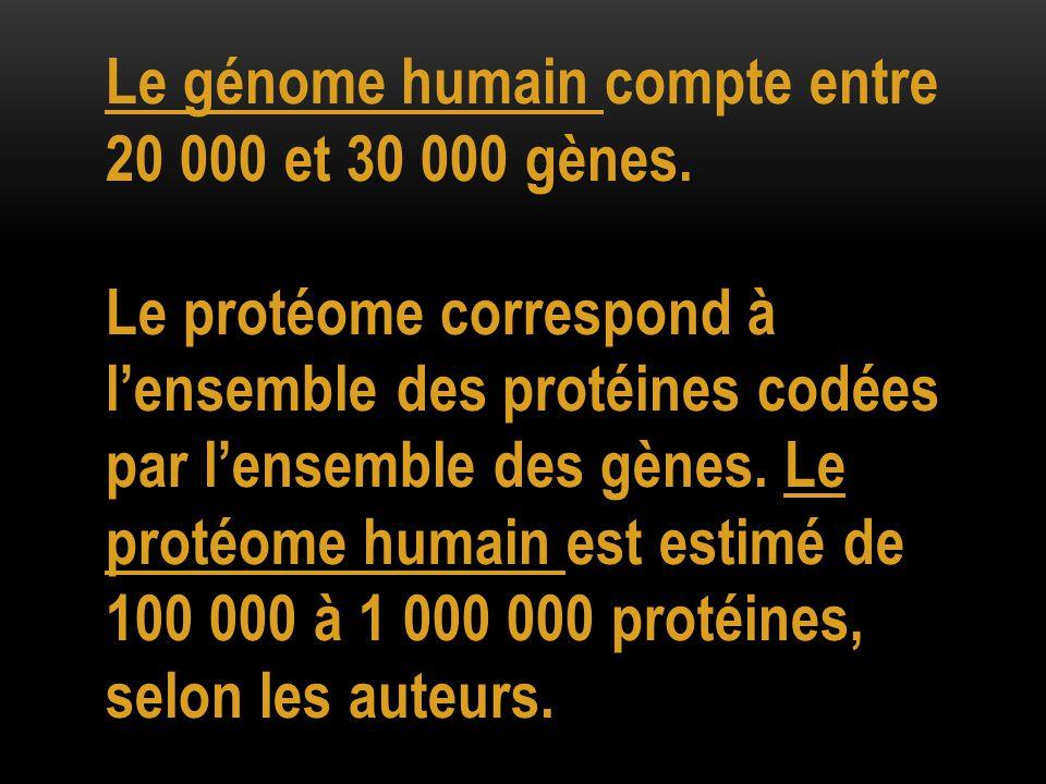 Le génome humain compte entre 20 000 et 30 000 gènes.