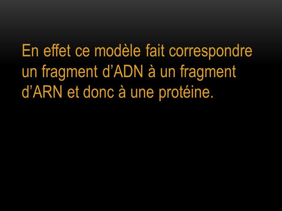 En effet ce modèle fait correspondre un fragment d'ADN à un fragment d'ARN et donc à une protéine.