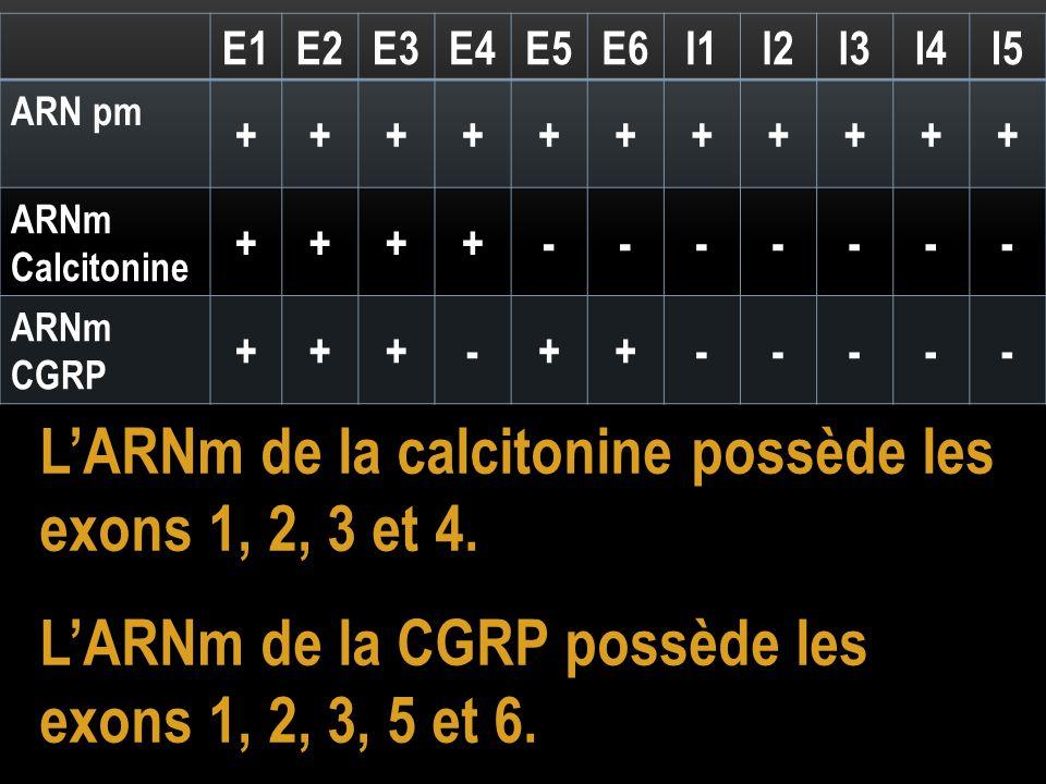 E1E2E3E4E5E6I1I2I3I4I5 ARN pm +++++++++++ ARNm Calcitonine ++++------- ARNm CGRP +++-++----- L'ARNm de la calcitonine possède les exons 1, 2, 3 et 4.