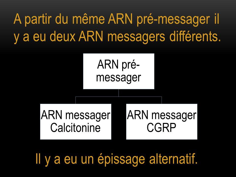 A partir du même ARN pré-messager il y a eu deux ARN messagers différents.
