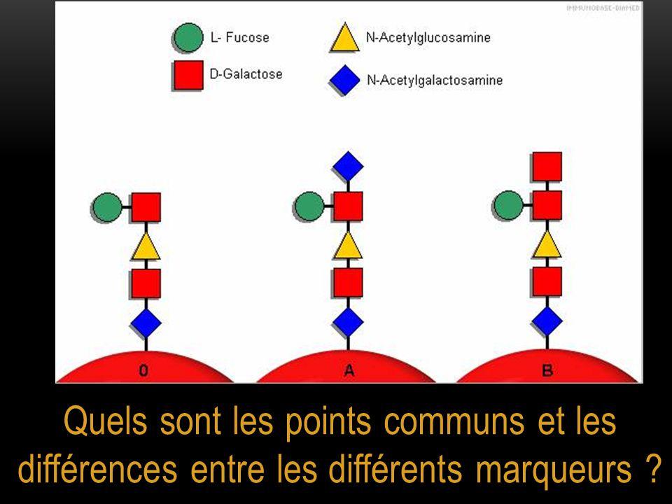 Quels sont les points communs et les différences entre les différents marqueurs ?
