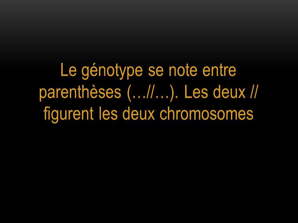 Le génotype se note entre parenthèses (…//…). Les deux // figurent les deux chromosomes