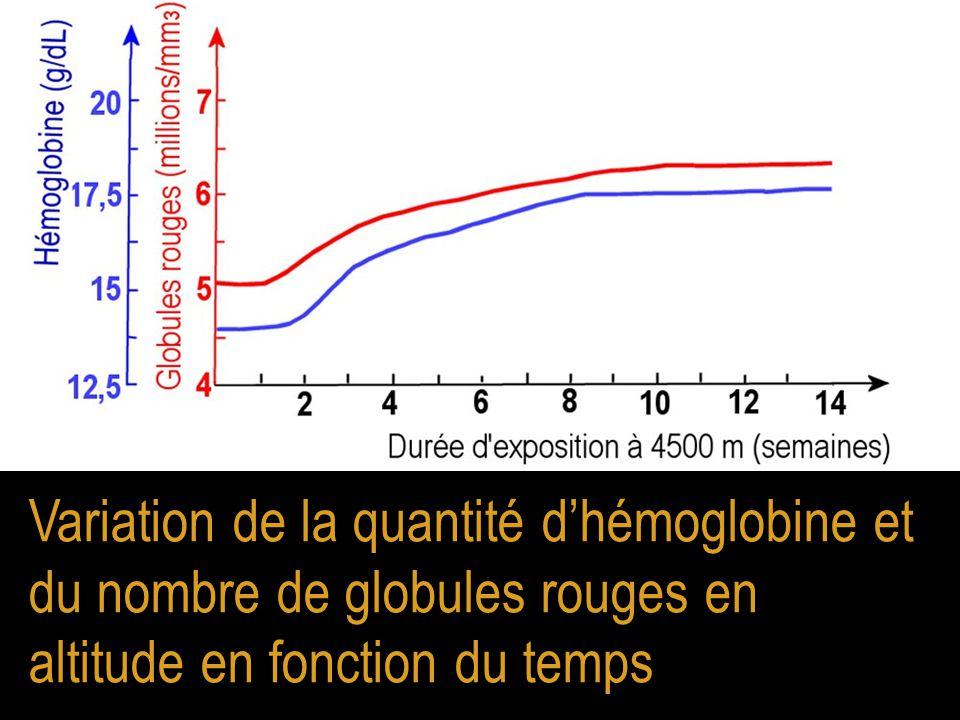 Variation de la quantité d'hémoglobine et du nombre de globules rouges en altitude en fonction du temps