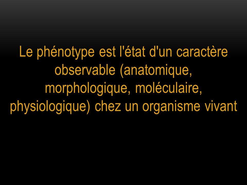 Le phénotype est l état d un caractère observable (anatomique, morphologique, moléculaire, physiologique) chez un organisme vivant