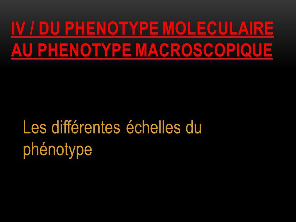 IV / DU PHENOTYPE MOLECULAIRE AU PHENOTYPE MACROSCOPIQUE Les différentes échelles du phénotype