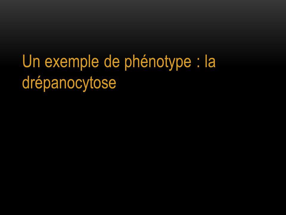 Un exemple de phénotype : la drépanocytose