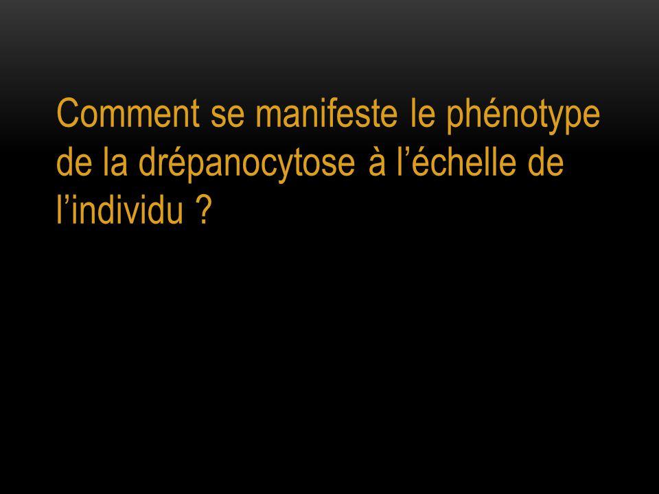 Comment se manifeste le phénotype de la drépanocytose à l'échelle de l'individu ?