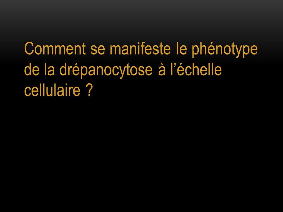 Comment se manifeste le phénotype de la drépanocytose à l'échelle cellulaire ?