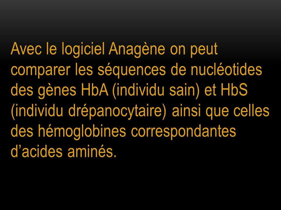 Avec le logiciel Anagène on peut comparer les séquences de nucléotides des gènes HbA (individu sain) et HbS (individu drépanocytaire) ainsi que celles des hémoglobines correspondantes d'acides aminés.