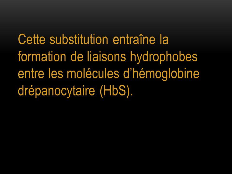 Cette substitution entraîne la formation de liaisons hydrophobes entre les molécules d'hémoglobine drépanocytaire (HbS).