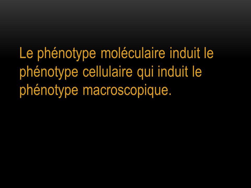Le phénotype moléculaire induit le phénotype cellulaire qui induit le phénotype macroscopique.