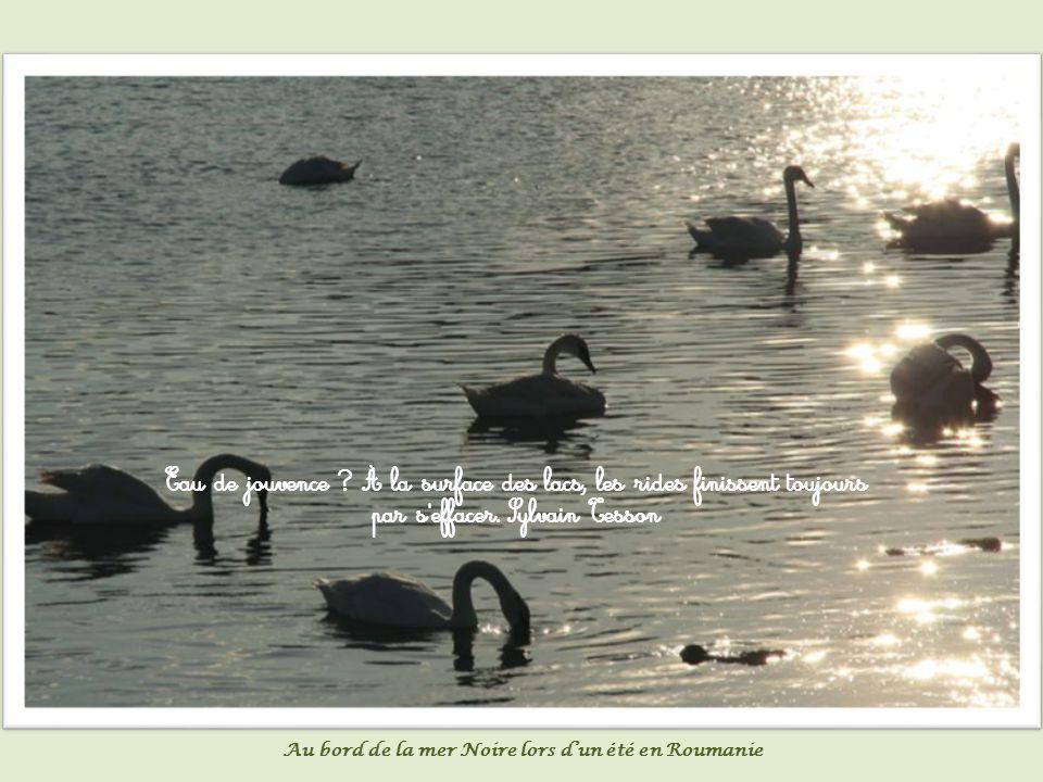 L étang se forme goutte à goutte. Proverbe arabe Reflet sur un étang en hiver à Davézieux (Ardèche)