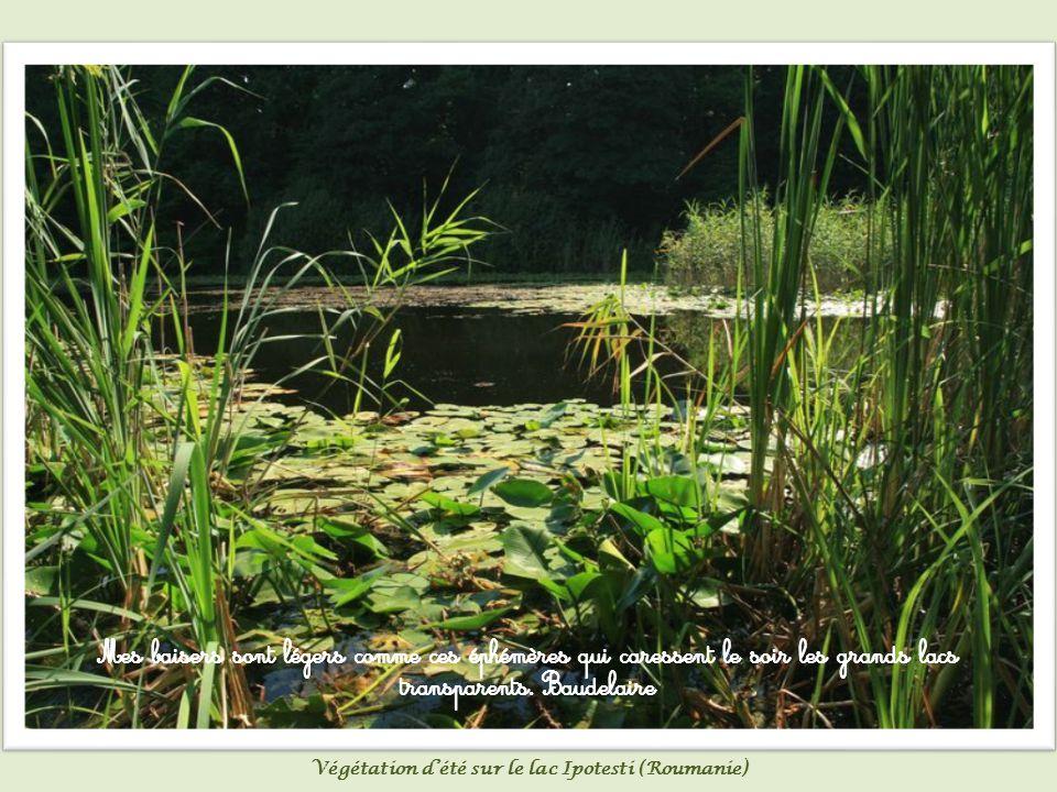 C est par leur murmure que les étangs mettent les fleuves en prison.