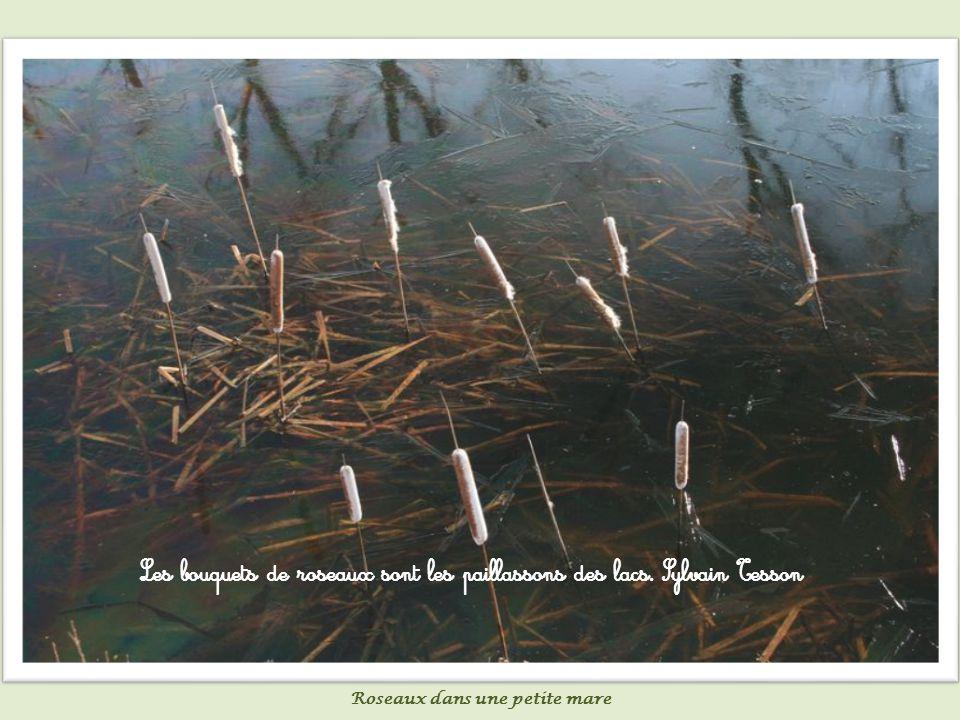 Un jour nous nous embarquerons sur l étang de nos souvenirs et referons pour le plaisir le voyage doux de la vie.
