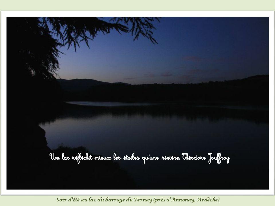 Les bouquets de roseaux sont les paillassons des lacs. Sylvain Tesson Roseaux dans une petite mare
