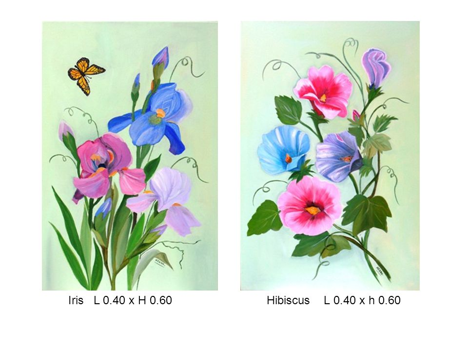 Iris L 0.40 x H 0.60 Hibiscus L 0.40 x h 0.60