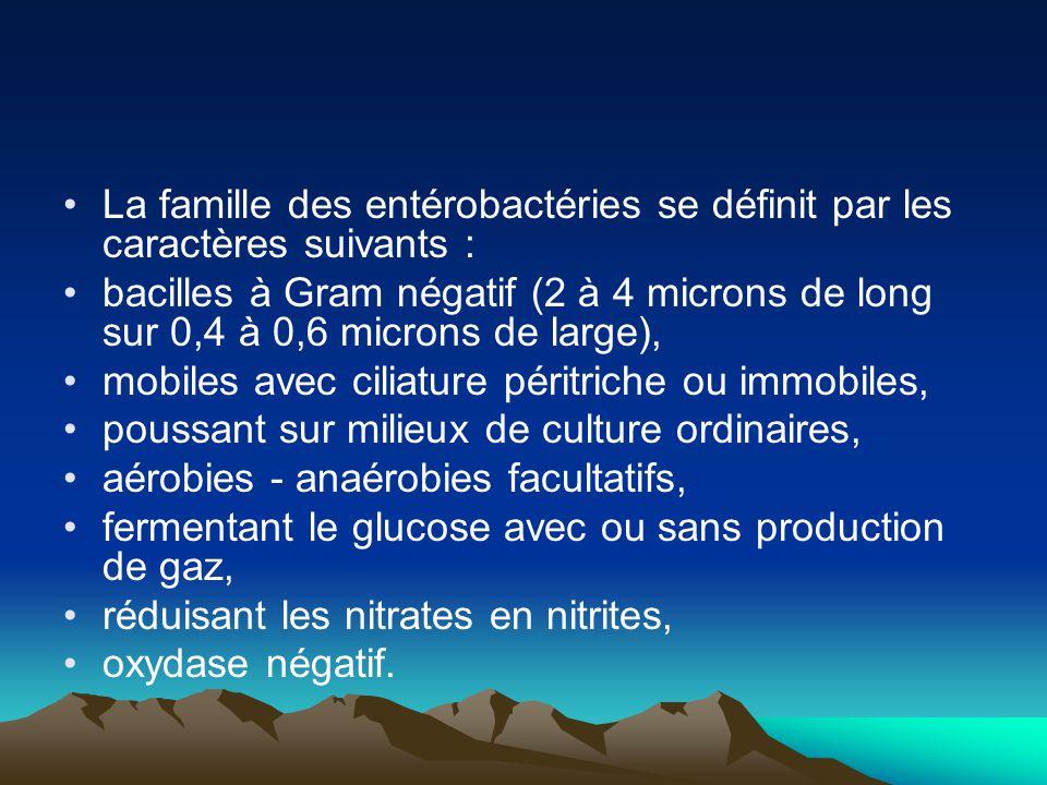 La famille des entérobactéries se définit par les caractères suivants : bacilles à Gram négatif (2 à 4 microns de long sur 0,4 à 0,6 microns de large)