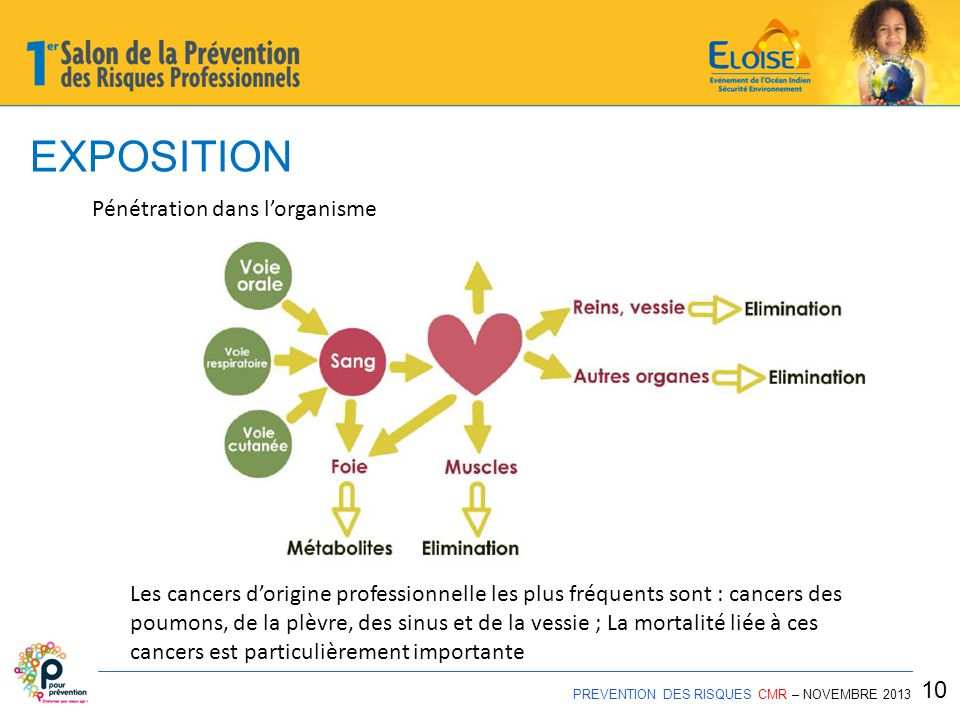 EXPOSITION PREVENTION DES RISQUES CMR – NOVEMBRE 2013 10 Pénétration dans l'organisme Les cancers d'origine professionnelle les plus fréquents sont : cancers des poumons, de la plèvre, des sinus et de la vessie ; La mortalité liée à ces cancers est particulièrement importante
