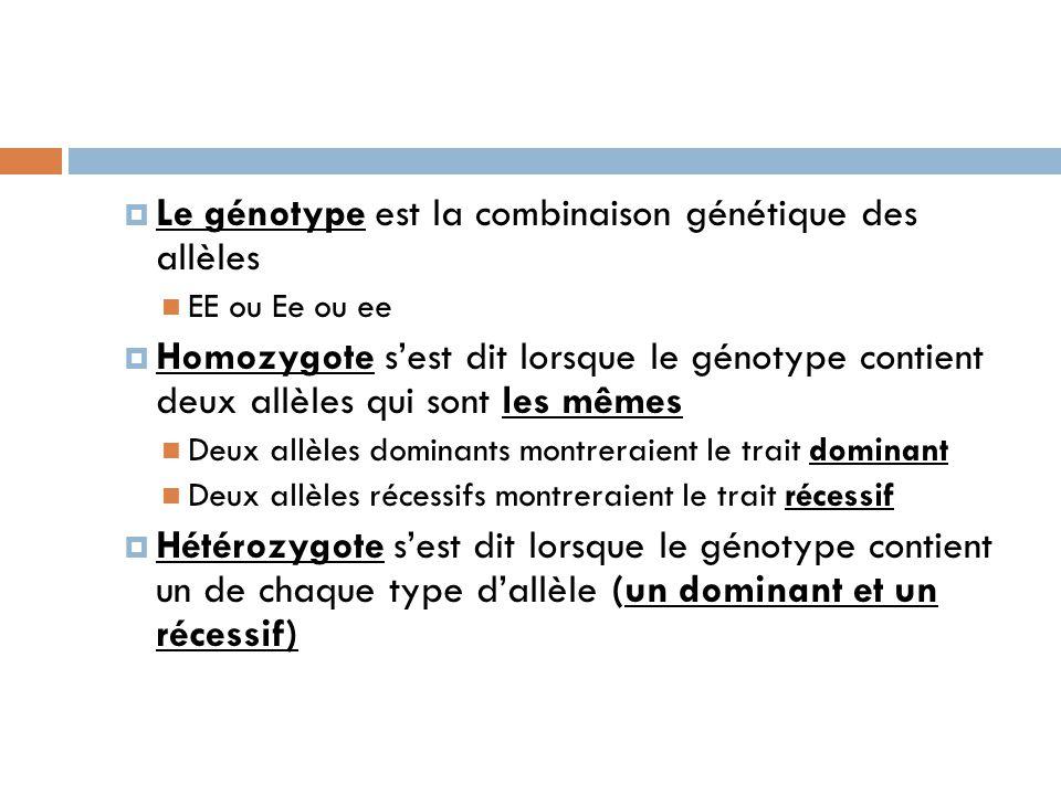  Le génotype est la combinaison génétique des allèles EE ou Ee ou ee  Homozygote s'est dit lorsque le génotype contient deux allèles qui sont les mêmes Deux allèles dominants montreraient le trait dominant Deux allèles récessifs montreraient le trait récessif  Hétérozygote s'est dit lorsque le génotype contient un de chaque type d'allèle (un dominant et un récessif)