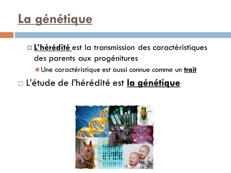 La génétique  L'hérédité est la transmission des caractéristiques des parents aux progénitures Une caractéristique est aussi connue comme un trait  L'étude de l'hérédité est la génétique