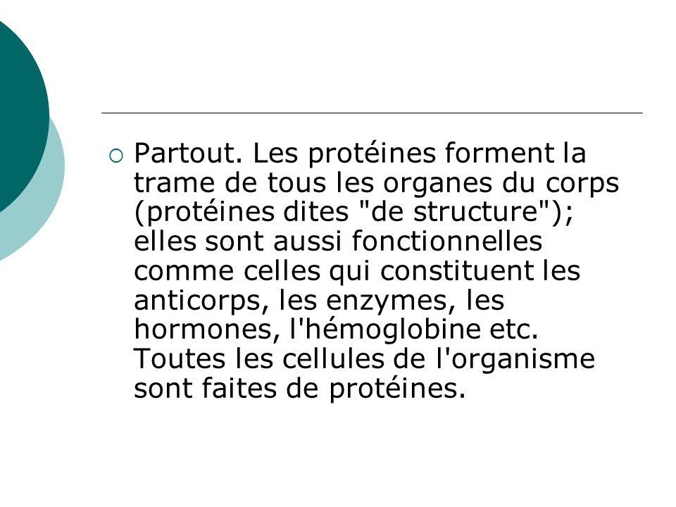  Partout. Les protéines forment la trame de tous les organes du corps (protéines dites