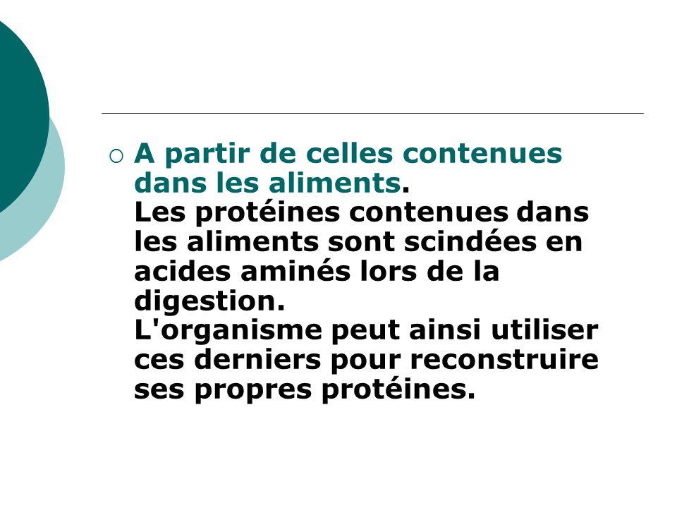  A partir de celles contenues dans les aliments. Les protéines contenues dans les aliments sont scindées en acides aminés lors de la digestion. L'org