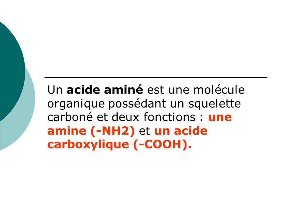 Un acide aminé est une molécule organique possédant un squelette carboné et deux fonctions : une amine (-NH2) et un acide carboxylique (-COOH).