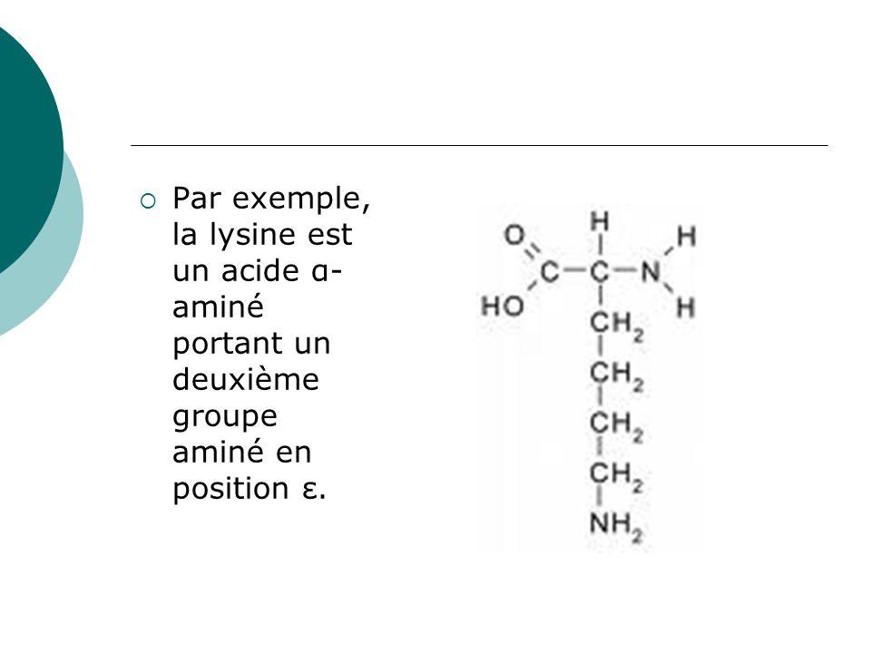  Par exemple, la lysine est un acide α- aminé portant un deuxième groupe aminé en position ε.