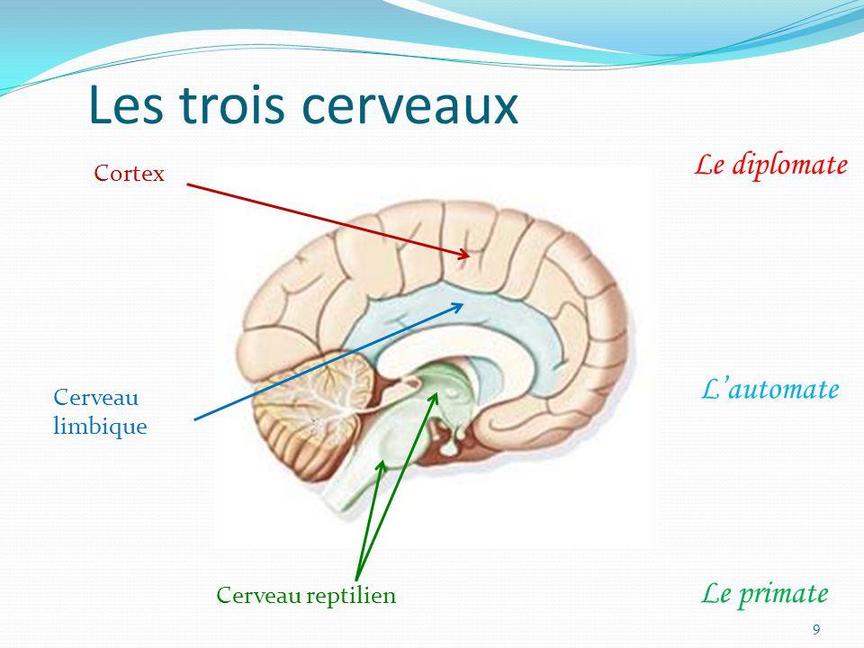 Les trois cerveaux Cerveau reptilien Cortex Cerveau limbique Le primate L'automate Le diplomate 9