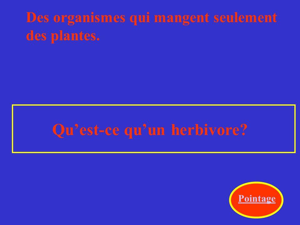 Des organismes qui mangent seulement des plantes. Qu'est-ce qu'un herbivore? Pointage