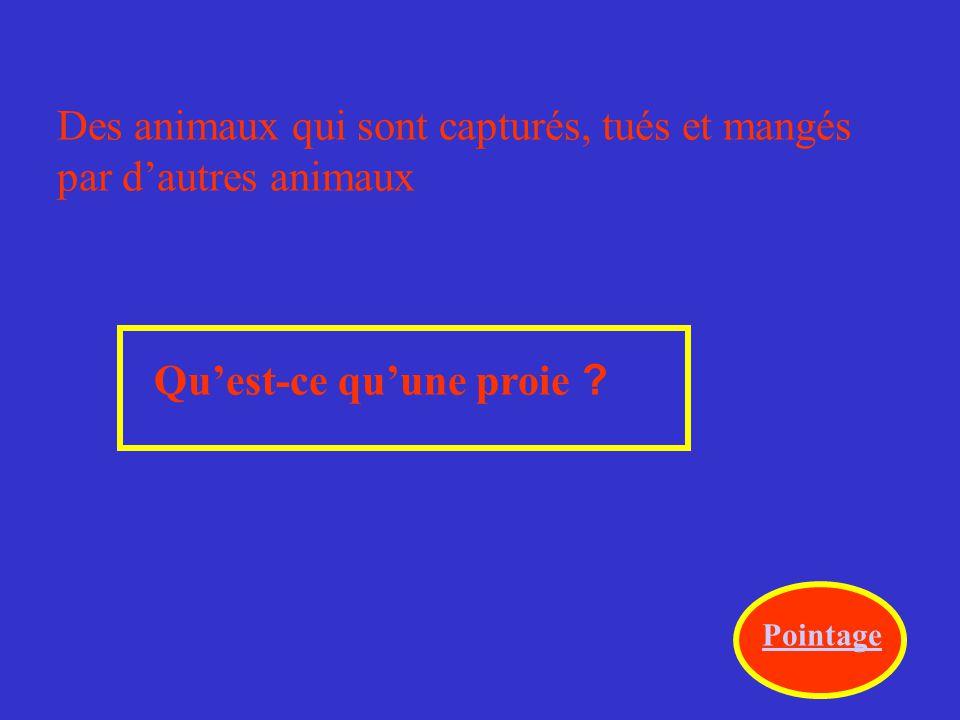 Des animaux qui sont capturés, tués et mangés par d'autres animaux Qu'est-ce qu'une proie .