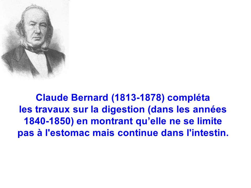 Claude Bernard (1813-1878) compléta les travaux sur la digestion (dans les années 1840-1850) en montrant qu'elle ne se limite pas à l estomac mais continue dans l intestin.
