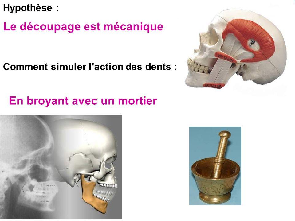 Hypothèse : Comment simuler l action des dents : Le découpage est mécanique En broyant avec un mortier
