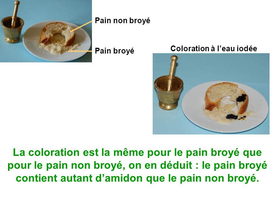 Coloration à l'eau iodée La coloration est la même pour le pain broyé que pour le pain non broyé, on en déduit : le pain broyé contient autant d'amidon que le pain non broyé.