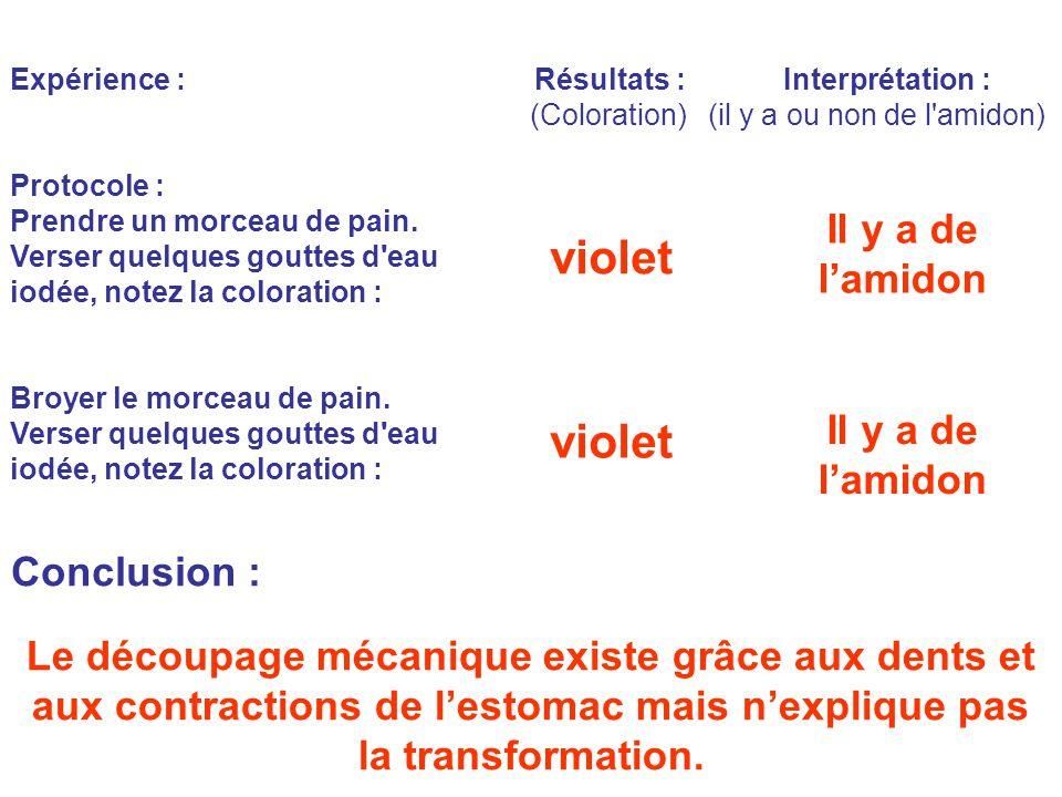 Expérience : Résultats : Interprétation : (Coloration) (il y a ou non de l amidon) Protocole : Prendre un morceau de pain.