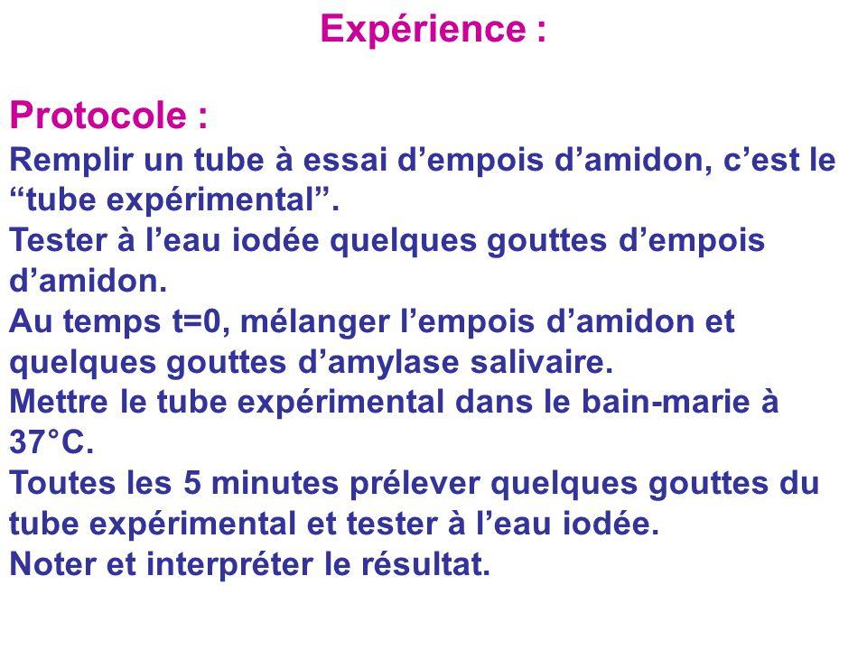 """Expérience : Protocole : Remplir un tube à essai d'empois d'amidon, c'est le """"tube expérimental"""". Tester à l'eau iodée quelques gouttes d'empois d'ami"""