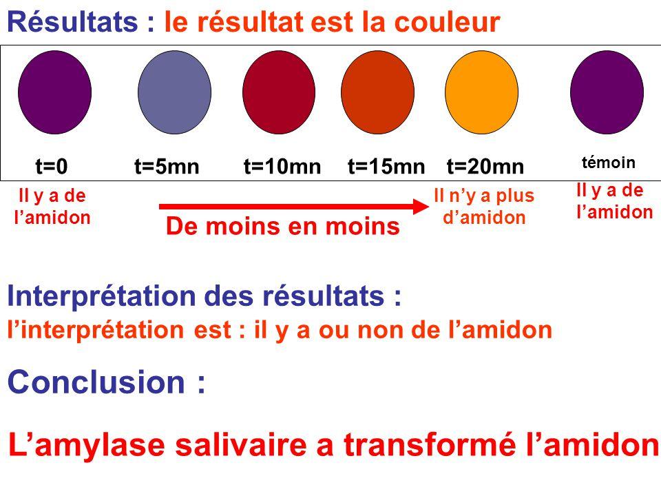Résultats : le résultat est la couleur Interprétation des résultats : l'interprétation est : il y a ou non de l'amidon témoin t=0t=5mnt=10mnt=15mnt=20mn Conclusion : Il y a de l'amidon De moins en moins Il n'y a plus d'amidon Il y a de l'amidon L'amylase salivaire a transformé l'amidon