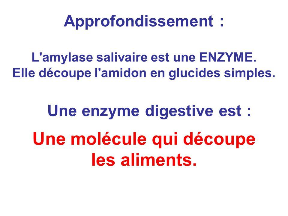 Approfondissement : L'amylase salivaire est une ENZYME. Elle découpe l'amidon en glucides simples. Une molécule qui découpe les aliments. Une enzyme d
