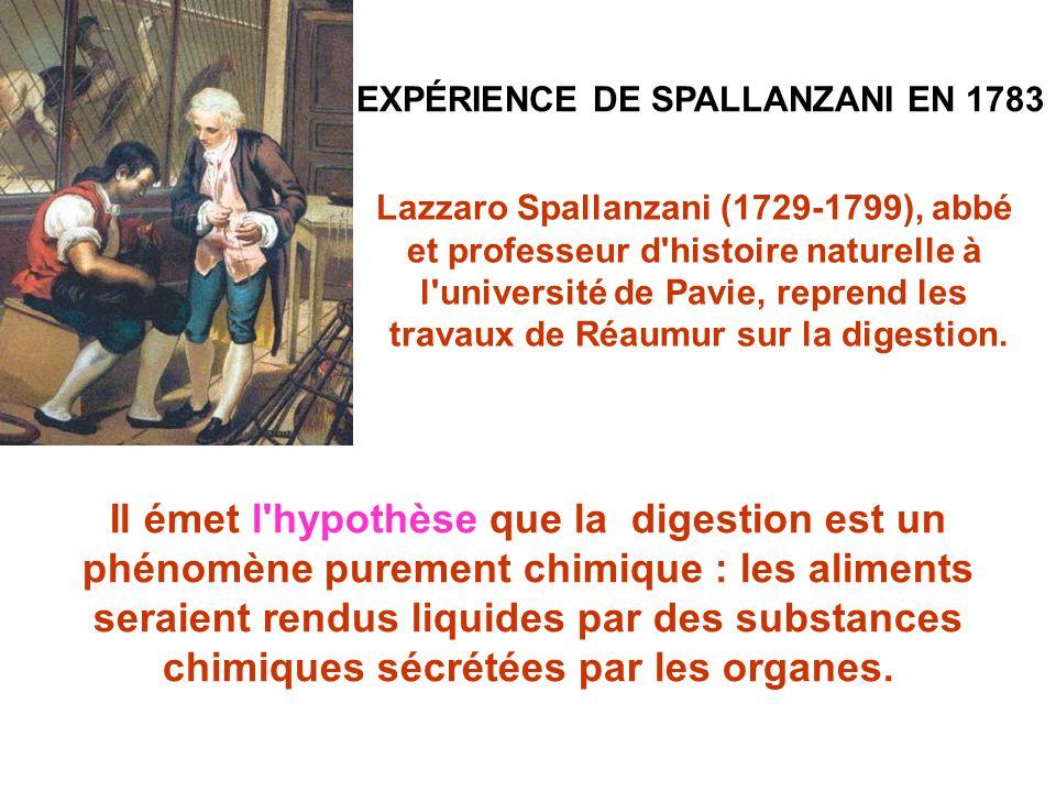 EXPÉRIENCE DE SPALLANZANI EN 1783 Il émet l hypothèse que la digestion est un phénomène purement chimique : les aliments seraient rendus liquides par des substances chimiques sécrétées par les organes.