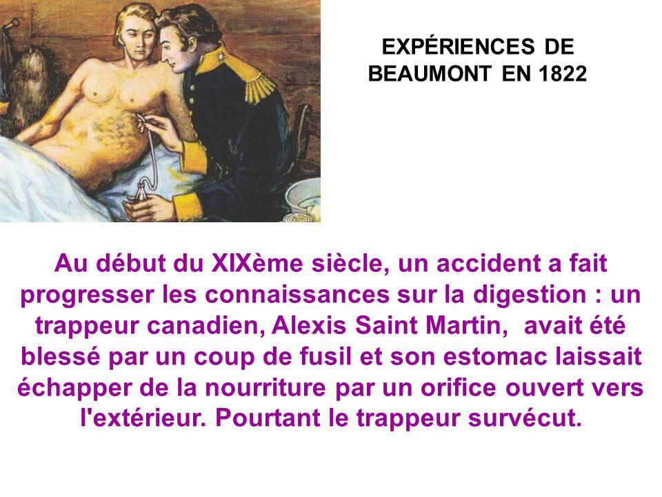 EXPÉRIENCES DE BEAUMONT EN 1822 Au début du XIXème siècle, un accident a fait progresser les connaissances sur la digestion : un trappeur canadien, Alexis Saint Martin, avait été blessé par un coup de fusil et son estomac laissait échapper de la nourriture par un orifice ouvert vers l extérieur.